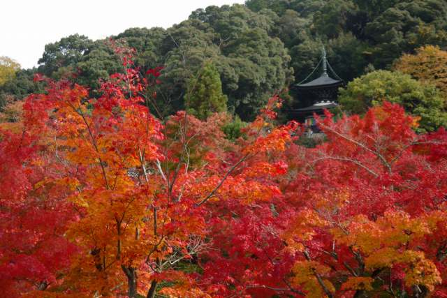 永観堂多宝塔の紅葉