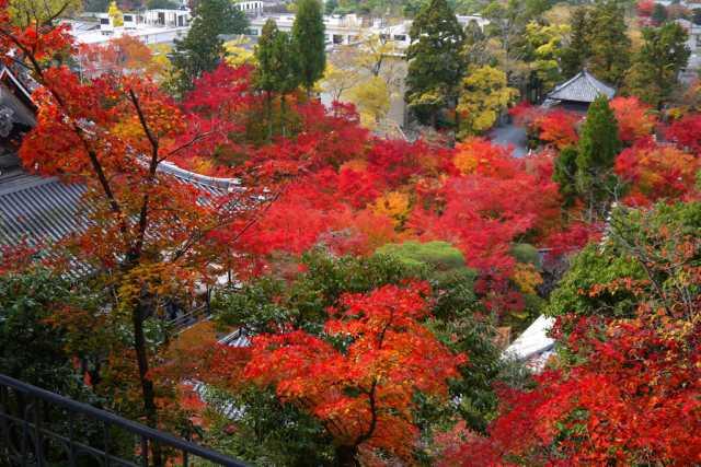 永観堂多宝塔から紅葉の景色