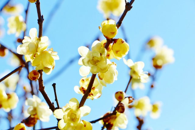 立春 と は
