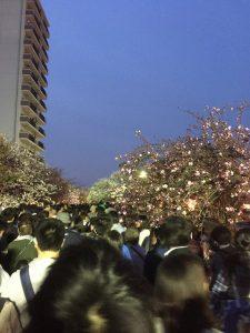 造幣局の桜の通り抜け