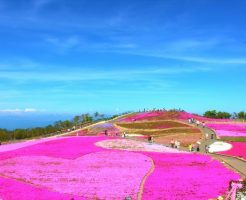 茶臼山高原芝桜の丘