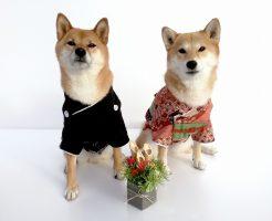 犬の写真素材