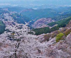 日本三大桜の名所吉野山