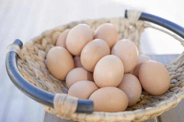 有精卵と無精卵の違い