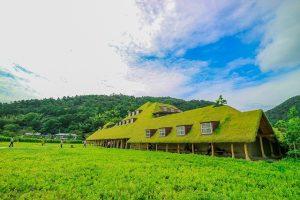 草屋根の夏
