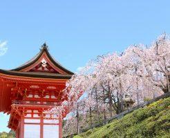 京都の桜の名所
