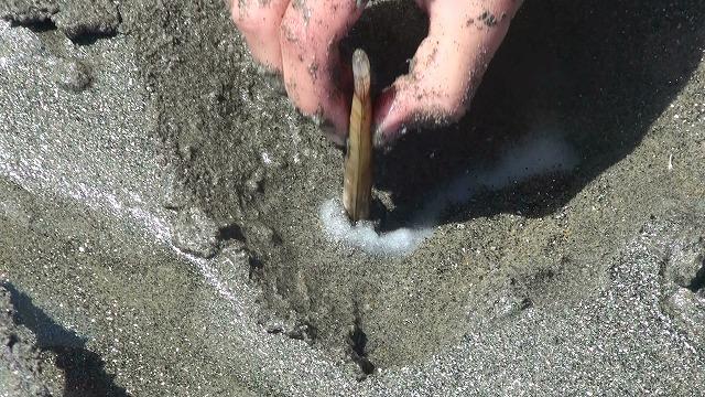 マテ貝の取り方