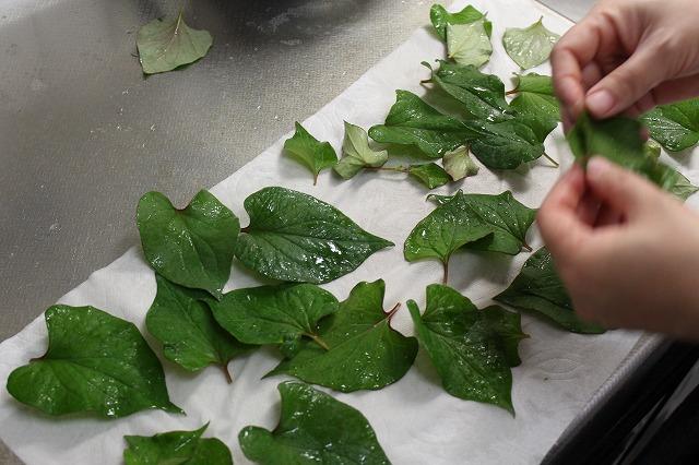 ドクダミの葉のチェック