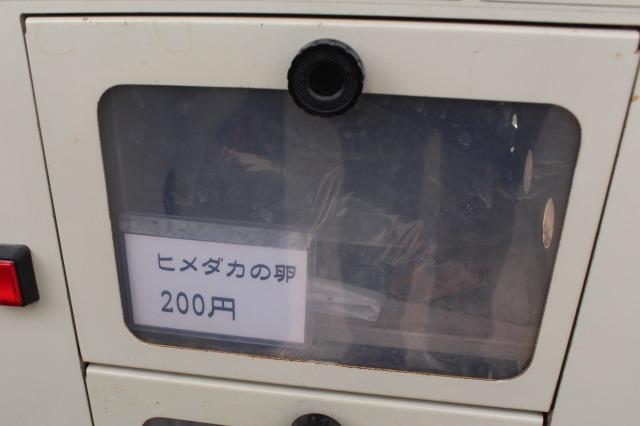 大和郡山金魚の自動販売機 ヒメダカの卵
