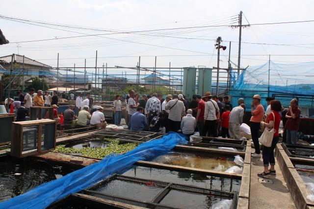 やまと錦魚園のセリ(競り)