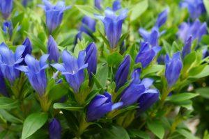 敬老の日の花の定番