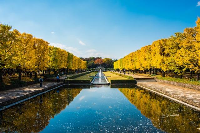 昭和記念公園の紅葉デート
