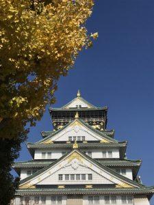 大阪城天守閣前の大イチョウ