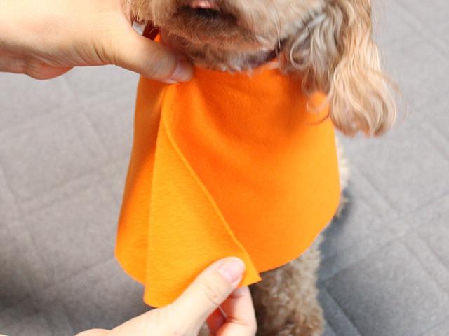 ハロウィンの衣装を犬に合わせてみます
