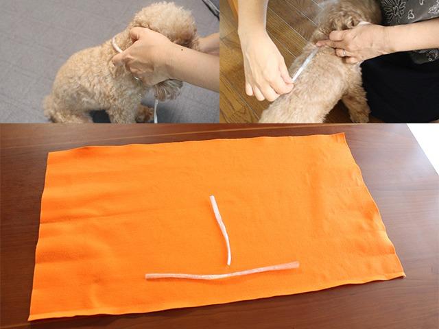 犬のハロウィン衣装を手作りするには犬の実寸を測ります。