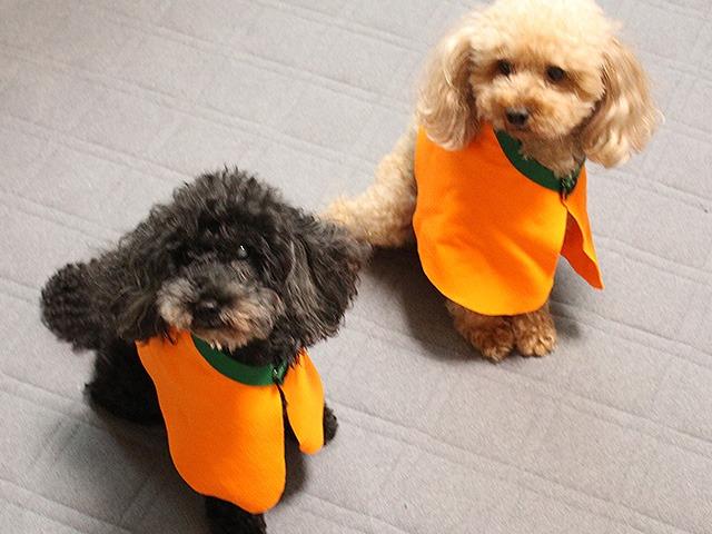 犬のハロウィン衣装の作り方